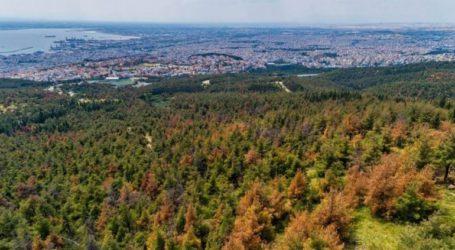 Απαγόρευση κυκλοφορίας από σήμερα μέχρι την Τρίτη στο δάσος Σέιχ Σου
