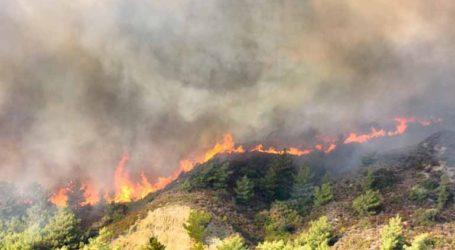 Ξέσπασαν 59 δασικές πυρκαγιές σε 24 ώρες