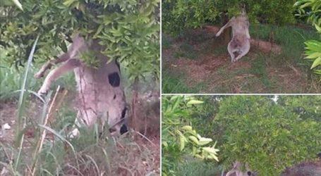 Εγκληματίες κρέμασαν σκύλο σε κτήμα της Θεσπρωτίας