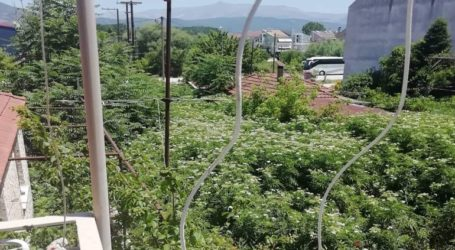 Παρατημένο οικόπεδο του Δήμου Ιωαννίνων αποτελεί εστία μόλυνσης για τους κατοίκους