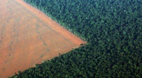 Η Γερμανία ακυρώνει χρηματοδότηση για την προστασία του τροπικού δάσους του Αμαζονίου