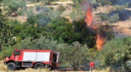 Πυρκαγιά σε δάσος στην περιοχή Μουζακαίικα