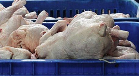 Κατάσχεση σε ακατάλληλα κοτόπουλα σε επιχείρηση εστίασης του Πειραιά