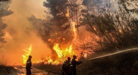 Μεγάλη φωτιά σε δάσος ανάμεσα σε Σανταμέρι και Πολύμορφο