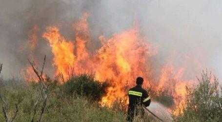 Υπό έλεγχο τέθηκε η πυρκαγιά στην Παιανία
