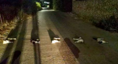 Σε εξέλιξη οι έρευνες για τον εντόπισμο του εγκληματία που βασάνισε και σκότωσε γάτες στα Χανιά