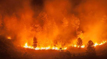 Δεν υπάρχει συνεργασία με τις ΗΠΑ για την κατάσβεση των πυρκαγιών