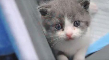Σκορδούλα: Η πρώτη κλωνοποιημένη γάτα