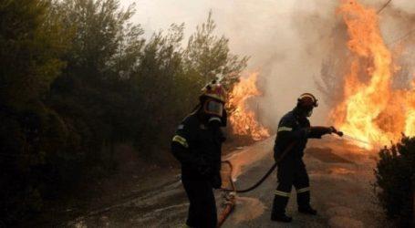 Φωτιά σε δασική έκταση στο Σούλι Θεσπρωτίας