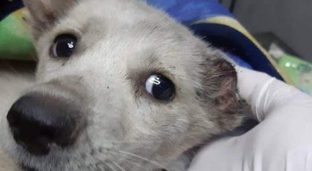 Φρίκη: Aκρωτηρίασαν σκύλο στην Ξάνθη