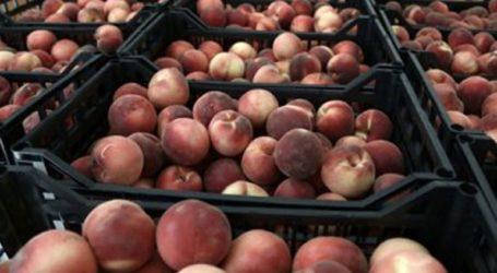 Δεσμεύτηκαν 6 τόνοι φρούτα σε επιχείρηση του Πειραιά