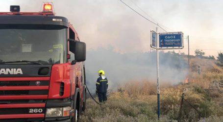 ΤΩΡΑ: Φωτιά στα Πευκάκια του Βόλου [εικόνα]