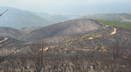 Χωρίς μεγάλη πυρκαγιά αυτό το καλοκαίρι η Μαγνησία – Πότε λήγει η αντιπυρική περίοδος
