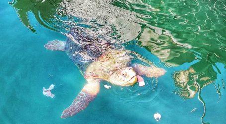 Νέα θαλάσσια χελώνα εμφανίστηκε στο λιμάνι του Βόλου [εικόνα]