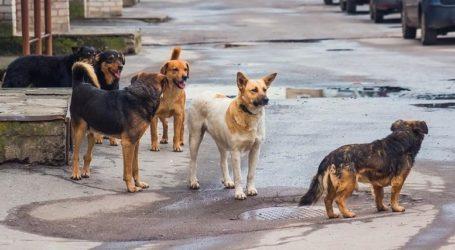 Δύο επιθέσεις αδέσποτων σκύλων σε πολίτες την τελευταία εβδομάδα στον Βόλο