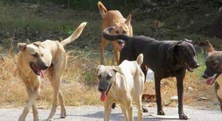 Βόλος: Τρεις επιθέσεις αδέσποτων σκύλων σε ηλικωμένους σε Άναυρο και παραλία