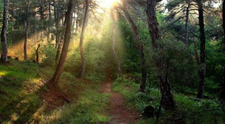 Απόφαση απαγόρευσης κυκλοφορίας σε δάση της Μαγνησίας αποφάσισε η Περιφέρεια Θεσσαλίας