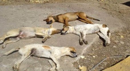 Νέα κτηνωδία στη Φαλάνη – Δηλητηρίασαν με φόλες πέντε σκυλιά!