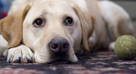 Έριξαν φόλες για σκυλάκια στα Φάρσαλα