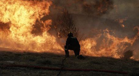 Πυρκαγιά στην Αγία Μαρίνα Νέας Μάκρης