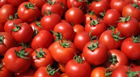 Δεσμεύτηκαν 2.200 κιλά ντομάτες στον Πειραιά