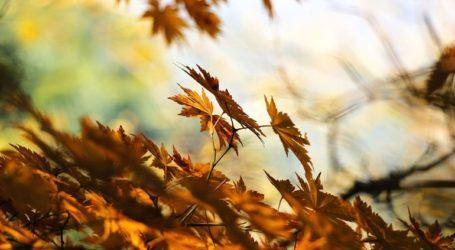 Πότε θα «μυρίσει» Φθινόπωρο;