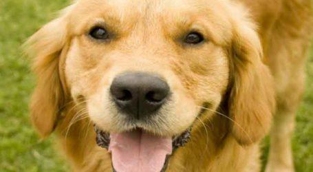 Συναγερμός: Μυστηριώδης ασθένεια σκοτώνει σκυλιά