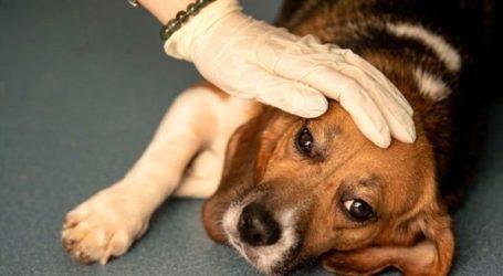 Μυστηριώδης θανατηφόρα ασθένεια πλήττει δεκάδες σκυλιά στη Νορβηγία