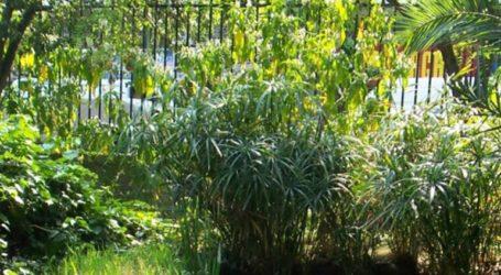 Προσβάσιμος για το κοινό ο Βοτανικός Κήπος του ΕΚΠΑ