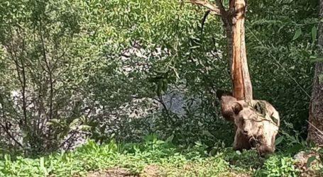 Επιχείρηση διάσωσης για παγιδευμένο αρκουδάκι