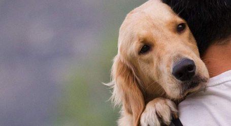 Συλλήψεις για παραβάσεις της νομοθεσίας που αφορά τα ζώα συντροφιάς