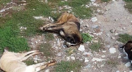 Δηλητηρίασαν 26 σκυλιά μέσα σε λίγες μέρες στη Φλώρινα
