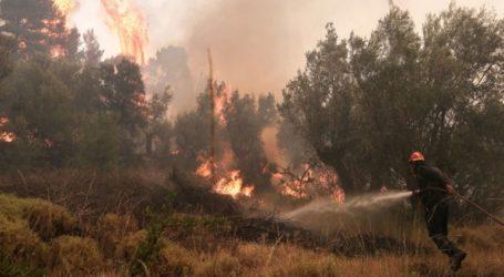 Υπό ύφεση η φωτιά στους Καλαφατιώνες