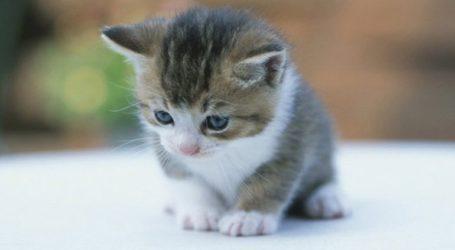 Έριξαν γατάκι μέσα σε γραμματοκιβώτιο των ΕΛΤΑ