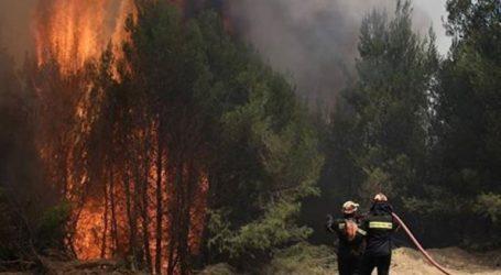 Καίγεται το δάσος της Στροφυλιάς στην Αχαΐα