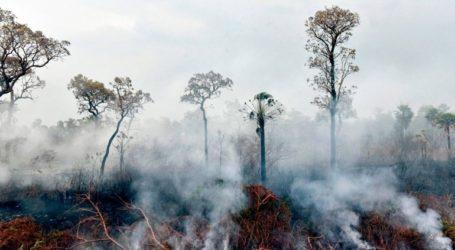 Περισσότερα από 2,3 εκατ. άγρια ζώα πέθαναν στις πυρκαγιές