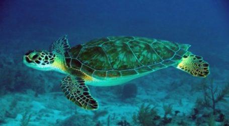 Σαλαμίνα: Νεκρή θαλάσσια χελώνα