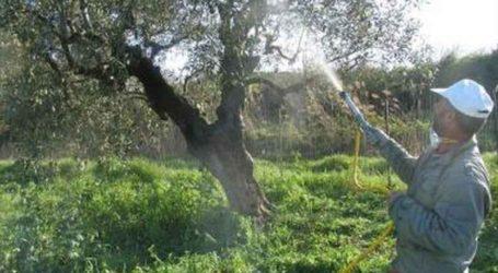 Διενέργεια δολωματικών ψεκασμών για την καταπολέμηση του δάκου της ελιάς σε ελαιοκομικές περιοχές της Μαγνησίας