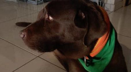 Έφυγε από τη ζωή ο σκύλος του Αχιλλέα Μπέου [εικόνα]