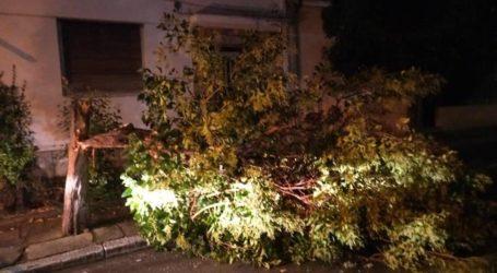 Έσπασε δέντρο λόγω των ισχυρών ανέμων στον Βόλο [εικόνα]