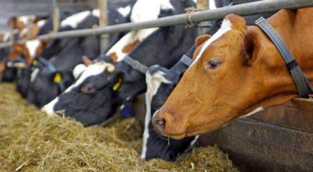 Συνέδριο στον Βόλο για τη ζωική παραγωγή