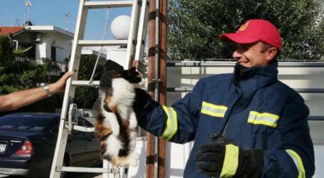 Μία εγκλωβισμένη γάτα κινητοποίησε την Πυροσβεστική στον Βόλο