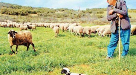 Ο Κτηνοτροφικός Σύλλογος Τυρνάβου, εκπέμπει SOS για τον καταρροϊκό πυρετό