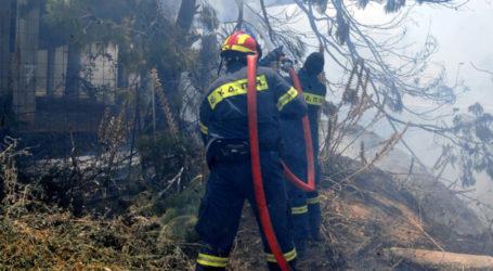 Πυρκαγιά καίει δασική έκταση στα Αμπελάκια