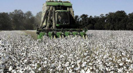 Σύσκεψη βαμβακοπαραγωγών καλεί ο Αγροτικός Σύλλογος πρώην Δήμου Πλατυκάμπου