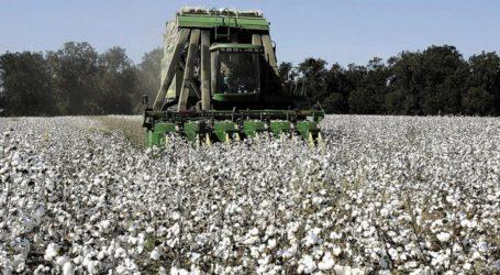 5ο δελτίο γεωργικών προειδοποιήσεων ολοκληρωμένης φυτοπροστασίας στη βαμβακοκαλλιέργεια