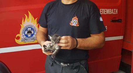 Πυροσβέστες διέσωσαν γατάκι στον Βόλο