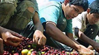 Ο φτηνός καφές σε βάρος του παραγωγού