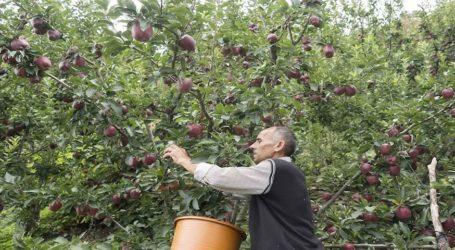 Το χαλάζι κατέστρεψε την ήδη «πληγωμένη» παραγωγή μήλων της Ζαγοράς