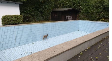 Ελάφι απεγκλωβίστηκε από πισίνα με τη βοήθεια κυνηγού